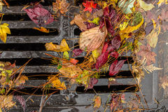 Multi colored leaves clogging a street drain royalty free stock photography