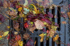 Multi colored leaves clogging a street drain Stock Image
