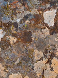 Multi-colored lichen covered rock Royalty Free Stock Photos