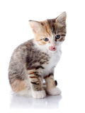 Multi-colored licking lips kitten. Royalty Free Stock Images
