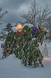 Multi-colored Lights Brighten Someone`s Yard. Trees or shrubs decorated for the holidays with multi-colored lights royalty free stock photos