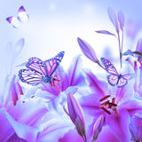 Multi-colored lilies and butterfly Royalty Free Stock Image