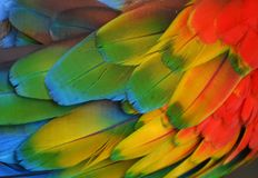 Multi-Colored Macaw Feathers Stock Images