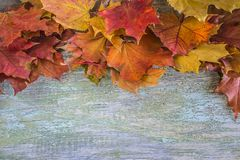 Multi colored maple leaves frame Stock Images