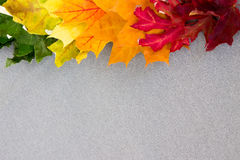 Multi-colored maple leaves on gray fabric from the top of the fr Royalty Free Stock Photography