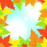 Multi-colored maple leaves in the light of sun pat. Ches of light Royalty Free Stock Photos