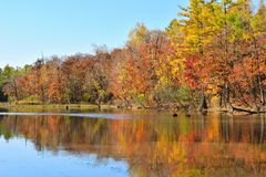 Reflection of autumn forest in the lake. stock photos