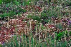 Multi-colored mountain grasses grow on the hillsides in the wild royalty free stock photography