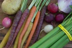 Multi-Colored Organische Wortelen met Aardappel, Ui, Selderie en Radijzen Stock Foto