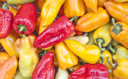 Multi-colored paprika Stock Images
