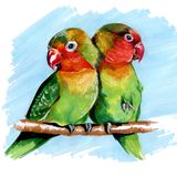 Multi-colored parrots lovebirds drawing markers stock illustration