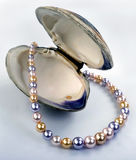 Multi Colored Pearls. Royalty Free Stock Photos