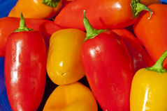 Multi-colored peppers Royalty Free Stock Photography