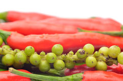 Multi-colored peppers on a white background Stock Images