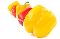 Multi-colored peppers on a white background Stock Photos