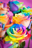 Multi-colored roses Royalty Free Stock Image