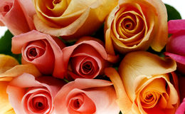 Multi-colored Roses Royalty Free Stock Photography