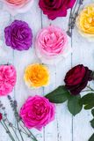 Multi-colored roses, top view Royalty Free Stock Images