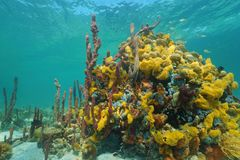 Multi colored sea sponges underwater in coral reef Stock Photo