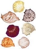 Multi-colored seashells Royalty Free Stock Photography