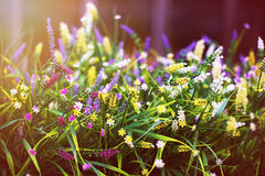 Multi-colored small decorative flowers in a pot under the sun. Royalty Free Stock Images