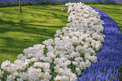 Multi-colored species of flower fields in park. Royalty Free Stock Image