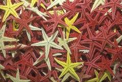 Multi-colored starfish in a pattern Royalty Free Stock Photos