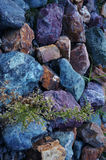 Multi-colored stones. Which make their way through the plant Royalty Free Stock Photo