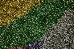 Multi-colored sunflower seed as background Royalty Free Stock Photo