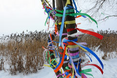 Multi-colored tapes. On a tree in the winter Royalty Free Stock Photo
