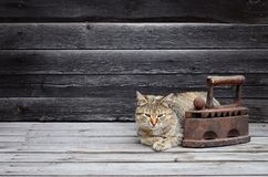 A thick cat is located next to a heavy and rusty old coal iron o royalty free stock photos
