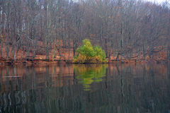 Multi-Colored Tree Reflected in Lake Royalty Free Stock Images