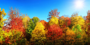 Multi-colored trees in autumn's best weather Stock Image