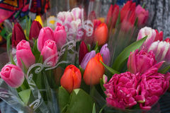 Multi-colored tulips Royalty Free Stock Images