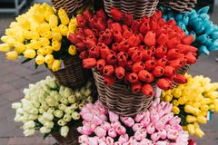 Multi colored tulps. In amsterdam flower shop stock image