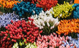 Multi colored tulps. In amsterdam flower shop stock images