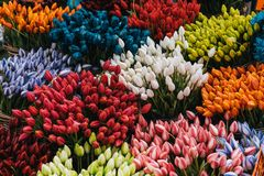 Multi colored tulps. In amsterdam flower shop stock photos