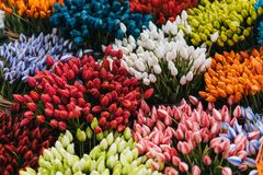 Multi colored tulps. In amsterdam flower shop royalty free stock image