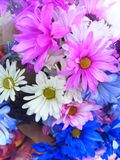 Multi colored wildflowers royalty free stock images