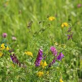 Multi colored wildflowers in a meadow Stock Photography