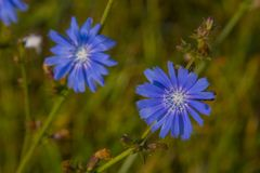 Multi-colored wildflowers. stock photo