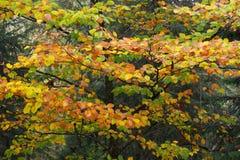 Multi colors autumn Stock Photos