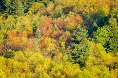 Multi colors treetops during autumn season. Multi colors treetops of a forest during autumn season Royalty Free Stock Images