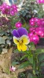 Multi colour flower stock images