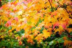 Multi colour leaf. In Autumn season Stock Image