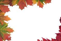 Multi coloured Autumn leaf frame Stock Images