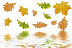 Multi-coloured Autumn Leaves Royalty Free Stock Image