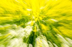 Multi-coloured background. Of blurred field flowers Royalty Free Stock Photo