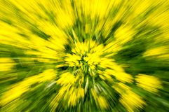 Multi-coloured background. Of blurred field flowers royalty free stock photos