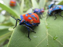 Multi-coloured beetles on green leaves Royalty Free Stock Image